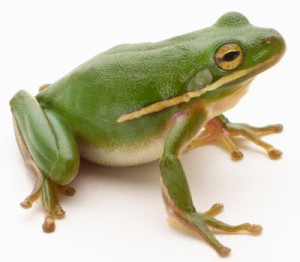 frog-1