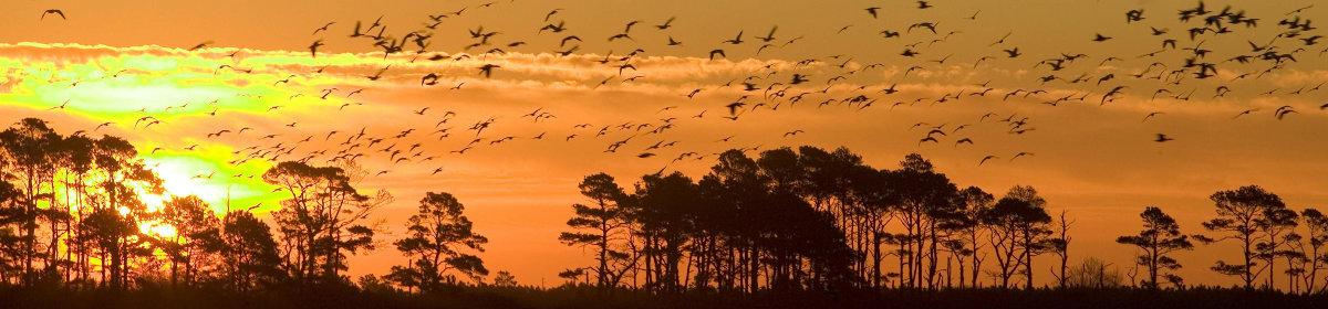 Avian Computing